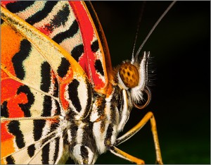 CR04 mike-wrankmore butterfly-portrait