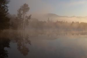 open - misty morning reflections - Barbara Hudson - 25