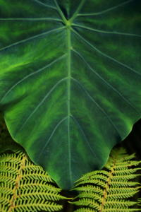 Prints - Green - Anthony van Zyl - 24