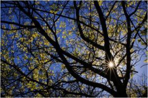 shoot - spring star - Anthony van Zyl - 25