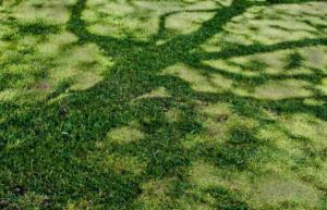 shoot - tree shadow - Douglas Young - 25