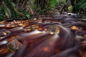 CR06 bipin-prag chocolate-river