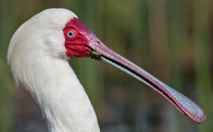 creative - a light lunch - Michele Nel - 27