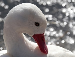 o-cho8-basking in the sun
